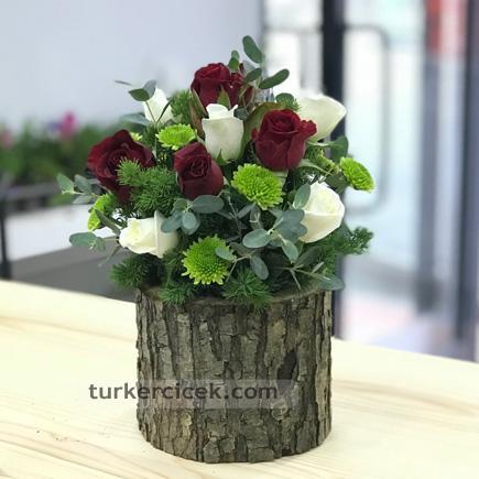 Beyaz ve Kırmızı Güller