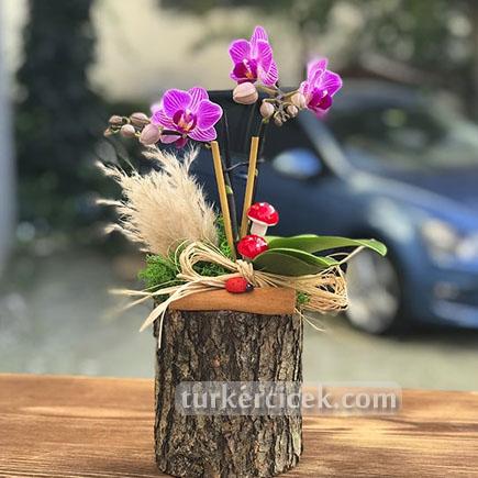 Mini Orkide Cicegi