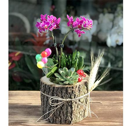 Kütük Saksıda Orkide ve Sukulent