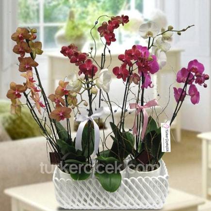 Renkli Orkide Sepeti