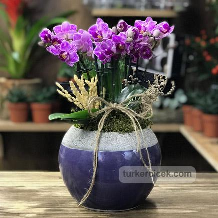 Mini Orkideler