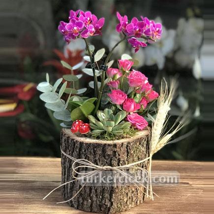 Mini Orkide ve Güller