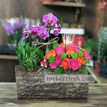 Mini Orkide ve Aranjman